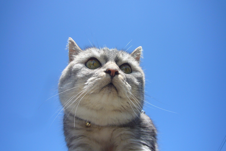 散歩に出たら空が青すぎるので、猫を持ち上げてみた
