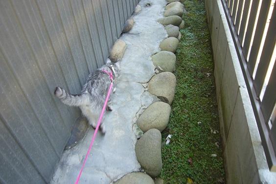 猫のリードが手から離れて泣きそうだった;