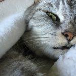 猫のひんやりベッドがひんやりし過ぎて