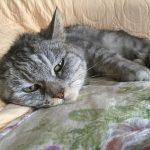 今日1日この猫の呼び名は『うん子ちゃん』