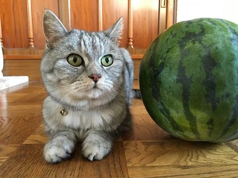 《追記あり》すいかと猫 飼い主はいろいろな準備