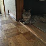ドアの敷居でくつろぐ猫