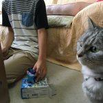 なにかと参加する猫