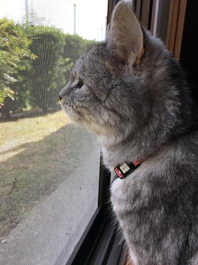 開かずの窓が開いた時の猫 &飼い主の散財