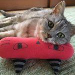 キッカーを枕にして昼寝する猫