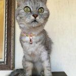 15歳の誕生日を迎えた猫