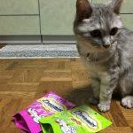 おやつはドリーミーズ、これにも好みがある猫(飼い主は派手好みなのか?)