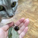 猫にバースデーカードとどんぐりを頂いたので見せてみた