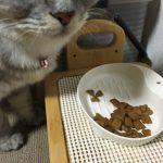 ネコにやさしい食器SS 買ってみた