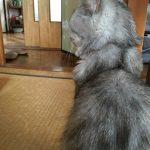 猫の爪から守る上敷き、やっとひっぺがえした!