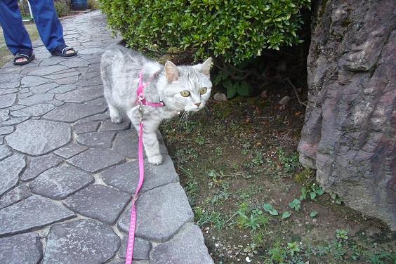 じいやから逃れる猫