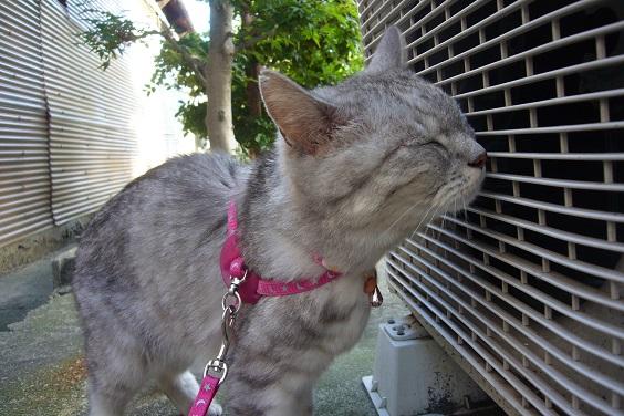 室外機にオス猫のスプレー疑惑