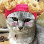ミルちぇる参上っっ!我が家のりゅうちぇるを猫でやってみた