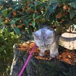 金木犀のジュータンと猫 そしてHappy Halloween