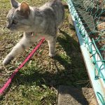 児童公園で遊ぶ猫