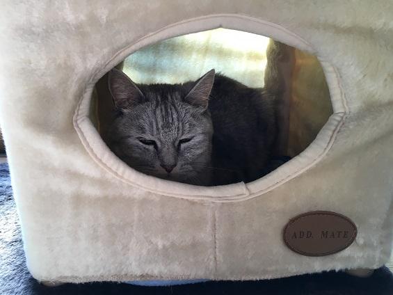 キャットタワーのボックスで昼寝する気まぐれな猫