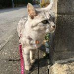 散歩中に変なところに顔を突っ込む猫