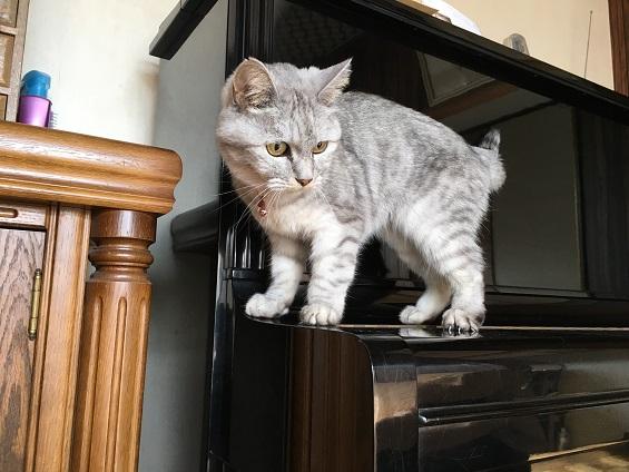予想外の物にびっくりする猫