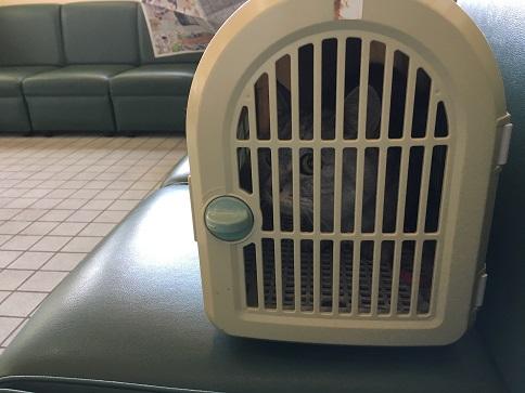猫の病院に行ったのですが・・・・・
