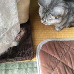 ミルの猫じゃらし流儀