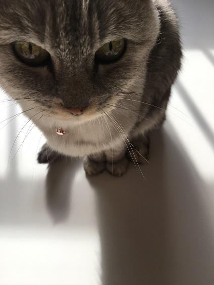 ホワイトの上の猫