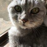 猫の血液検査の結果、肝臓の数値が3倍