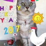 謹賀新年'2017 元旦の猫