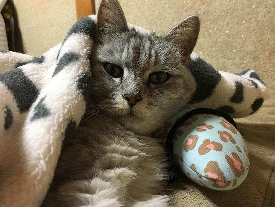 猫のあごのせ枕☆愛用中&年末の動画