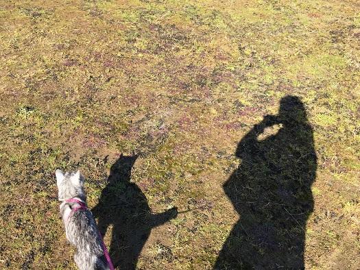 暖かく晴れた今日、猫と公園散歩していたら・・・