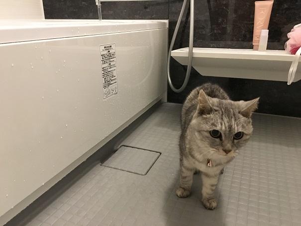 猫in おニューのバスルーム