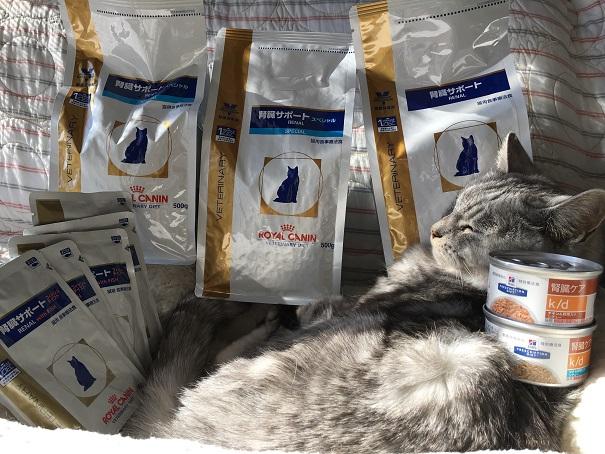 腎臓サポートのフードを昼寝してる猫の上に置いてみた