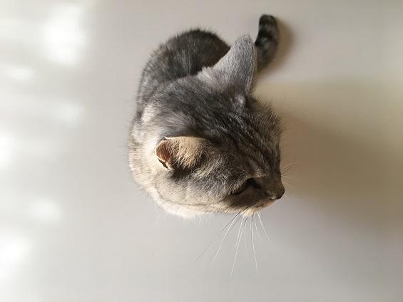 久しぶりに猫の爪が刺さったぁぁぁぁあ