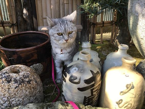 何かを探している猫 vol.2