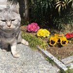 またまた春と猫&ひさびさのばあやの部屋