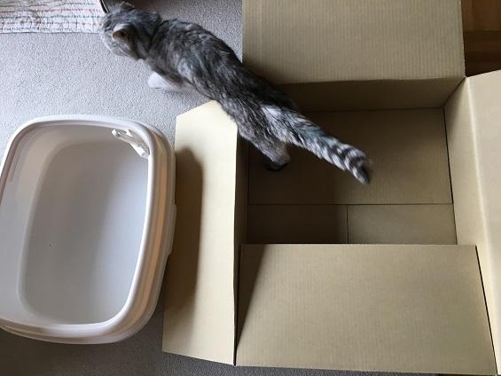 やっと猫トイレを新調した