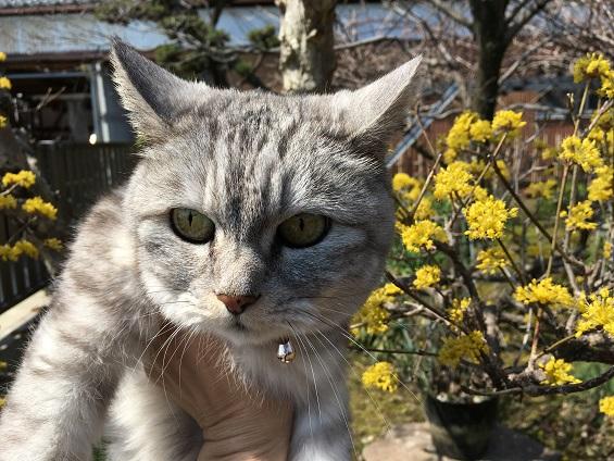 花との撮影に協力的でない猫