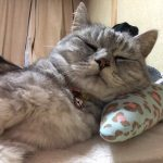 猫が下痢で何度もトイレに(*´Д`) 飼い主育児ノイローゼ発動