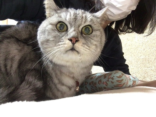 今日も受診 絶食絶飲解かれたのに猫が水を飲まない→飲んだ!!