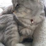 猫の下痢 その後軟便