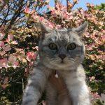 今年も咲いた花水木と記念撮影の猫