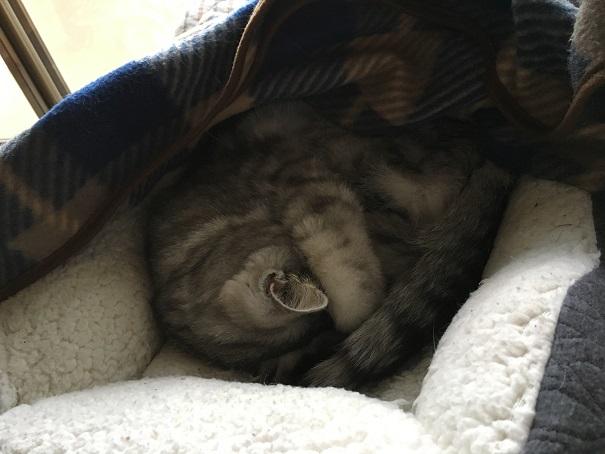 猫・注射後のよだれなどの異変は、トリブリッセンの副作用と判明