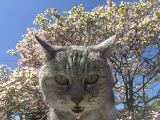 モデル拒否の猫とイレギュラーで心配する飼い主