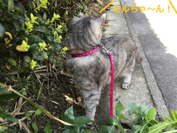 散歩中自分の名前を呼ばれる猫