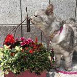 【追記画像有】猫を新しい動物病院へ連れていった ~おしっこの量編~