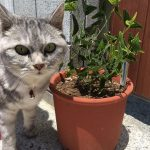 猫の散歩中、ヒコウキソウとやらを見て驚愕する飼い主