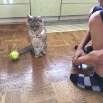 甥っ子を遊んでやってる?猫