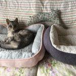 夏用猫ベッドに衣替え