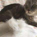 猫の換毛期 今がピーク