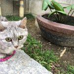 猫の散歩中に発見した大きく育ったもの2つ