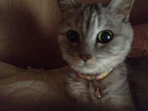 3時間鳴き続けた猫